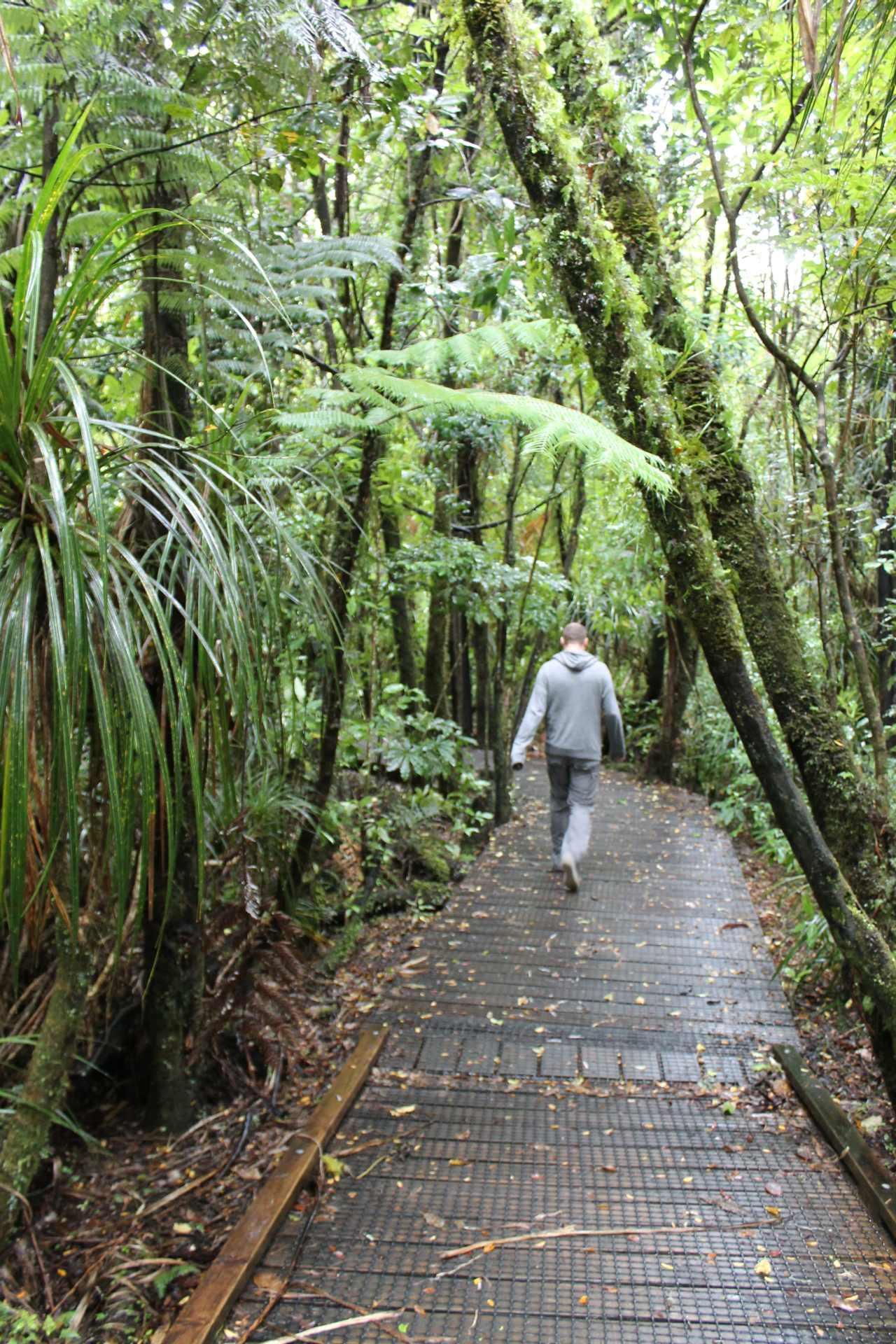 Goed te wandelen waipoua forest